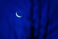 Blue moon scenery at night and blurred tree Royalty Free Stock Images