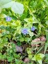 Blue mountain fauna Royalty Free Stock Photo