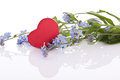 Blue myosotis flower with red wooden heart decoration Royalty Free Stock Photography