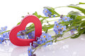 Blue myosotis flower with red wooden heart decoration Royalty Free Stock Photos
