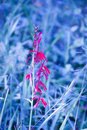 Blue nature grass background with red flower toned abstract texture selective focus Stock Images