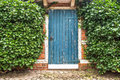 Blue old wooden door built surrounded by ivy in stone wall . summer Scene Royalty Free Stock Photo