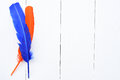 Blue and orange feather Royalty Free Stock Photo