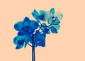 Blue orchid retro tinted close up Stock Photography
