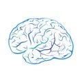 Blue outline brain mark.