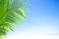 Blue and palm Royalty Free Stock Image