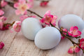 Blue Pastel Easter Eggs and Cherry Blossoms on White Wood Backgr