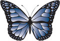 Blue patterned butterfly Royalty Free Stock Photo