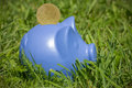 Blue piggy on the grass bank with coin green Royalty Free Stock Photos