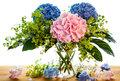 Blue and pink hydrangea Royalty Free Stock Photo