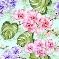 Blue And Pink Orchid Flowers W...