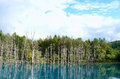 Blue Pond in Biei, Shirogane. Royalty Free Stock Photos