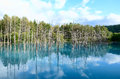 Blue Pond in Biei, Shirogane. Royalty Free Stock Images