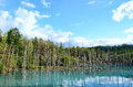 Blue Pond in Biei, Shirogane. Royalty Free Stock Image