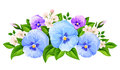 Blue and purple pansy flowers. Vector illustration.