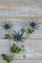 Blue purple thistle sea holly flower plant on a grey wooden empty copy space background with wooden decoration in spring Royalty Free Stock Photo