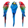 Blue and red macaw Royalty Free Stock Photo