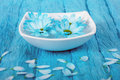 Blue rhapsody Royalty Free Stock Photo