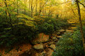 Blue Ridge Mountain Yellow Autumn Creek WNC Stock Photography
