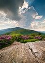 Modrý hrebeň hory kvitnúce kvety