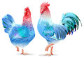Blue Rooster and chicken female symbol 2017 by Chinese calendar