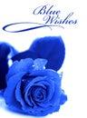 Blue rose Royalty Free Stock Photo
