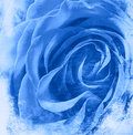 Blue rose background Stock Photo