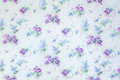 Blue rose  flowers backdrop pattern on wall background texture. Royalty Free Stock Photo