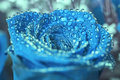 Blue rose with water drops Royalty Free Stock Photo