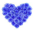 Blue roses in heart shape isolated isolated on white Royalty Free Stock Image