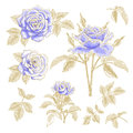Blue roses set collection of with leaves isolated on a white background design elements Stock Photography