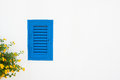 Blue shutter window and yellow flowers on white wall Royalty Free Stock Photo
