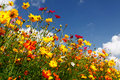 Blue Skies, White Clouds and Colorful Wildflowers Royalty Free Stock Photo
