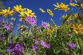Blue sky with arnica and geranium plants Royalty Free Stock Photo