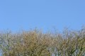 Blue sky with branches Royalty Free Stock Photos
