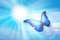 Blue Sky Butterfly Royalty Free Stock Photo