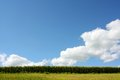 Blue Sky and Cornfield Royalty Free Stock Photo