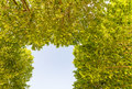 Blue Sky Framed By Green Tree ...
