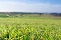 Blue sky and green grass field of Stock Photos