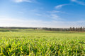 Blue sky and green grass field of Royalty Free Stock Images