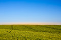 Blue sky and green grass Royalty Free Stock Photo
