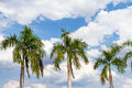 Blue sky and green palm tree background