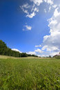 Blue sky and lovely clouds over the summer meadow Royalty Free Stock Image