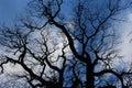 Blue Sky with Mosiac Trees Royalty Free Stock Photo