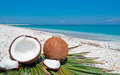 Blue sky over coconuts by the shore on a clear day Royalty Free Stock Photo