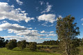 Blue sky over the park sydney in winter Royalty Free Stock Images