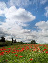 Blue sky over a poppy field in tuscany near pienza in italy Stock Photos