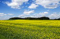 Blue sky over the rape field photo shows a beautiful with clouds Royalty Free Stock Photography