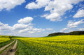 Blue sky over the rape field photo shows a beautiful with clouds Stock Photo