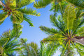 Blue sky and palm trees from below Royalty Free Stock Photo